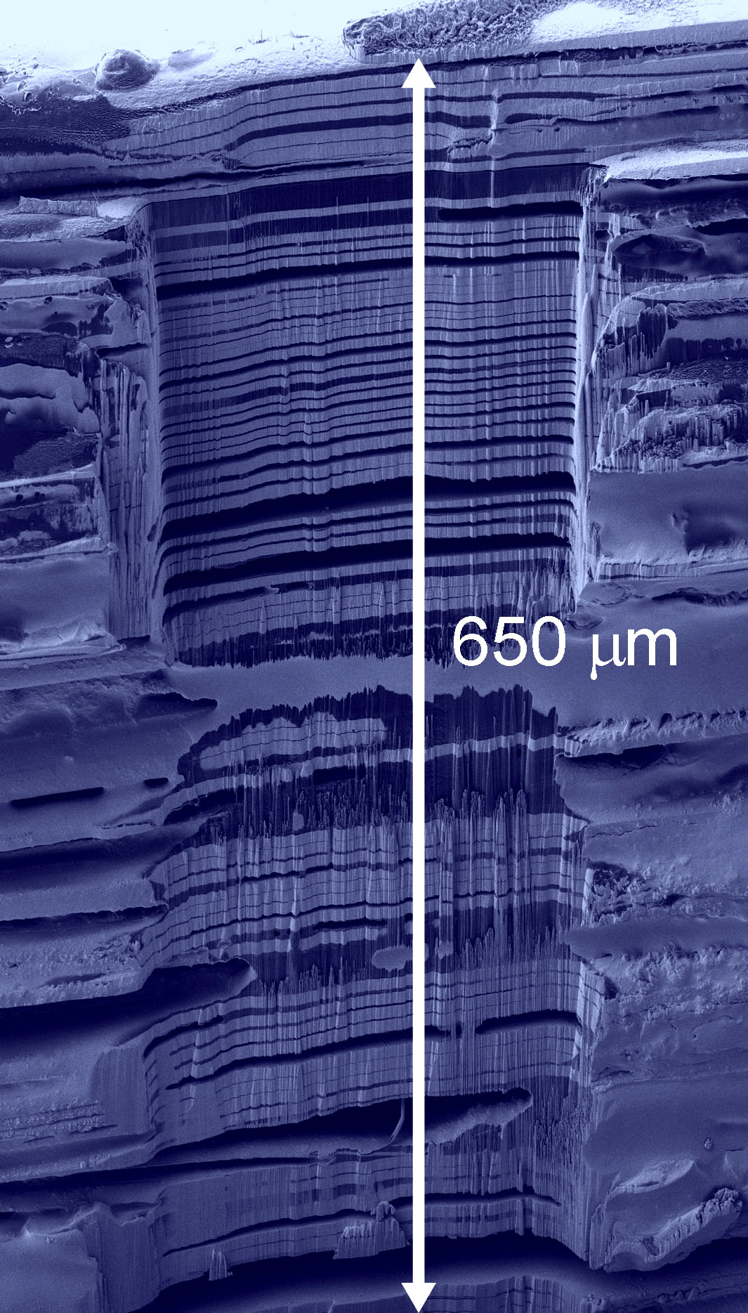 Figure: Secondary electron image of a microfabricated metal/polymer multilayer structure. A conventional gallium FIB would take days to remove such a large amount of material.  Images like these provide input for three dimensional reconstructions of materials structure.