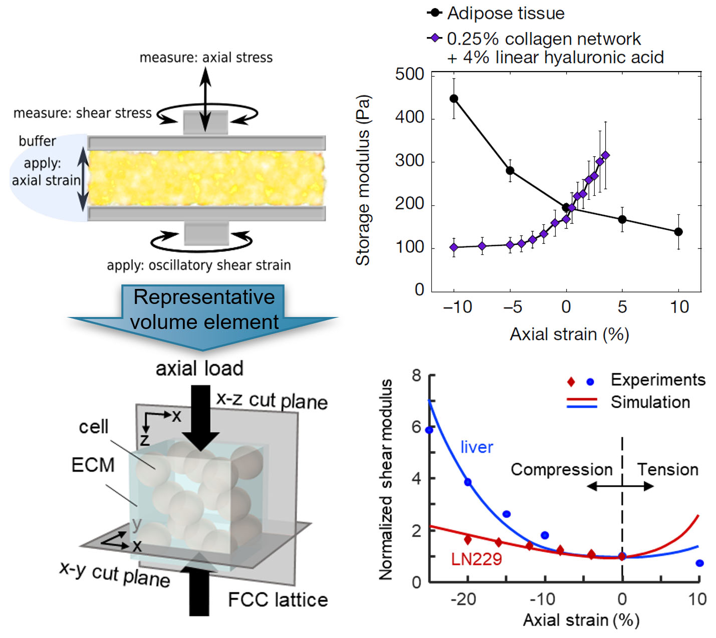 Figure top left: multiaxial response of soft tissues, figure bottom left: predicted response of the network model from the Shenoy group, figure top right: Polymer networks that soften in compression but stiffen in extension can be converted to materials that stiffen in compression but not in extension by including within the network either cells or inert particles to restrict the relaxation modes of the fibrous networks that surround them, figure bottom right: predicted response of the network model from the Shenoy group