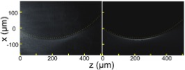 Experimental (left) and theoretical (right) accelerating beams generated by our metasurface. The radius of curvature is 400 µm.